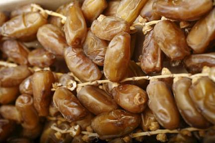 Bionoor, production de dattes fraiches biologiques en Algerie